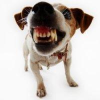 Как уберечь себя от агрессивной собаки?